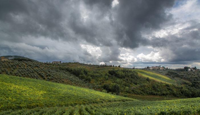 Weinberge Toskana