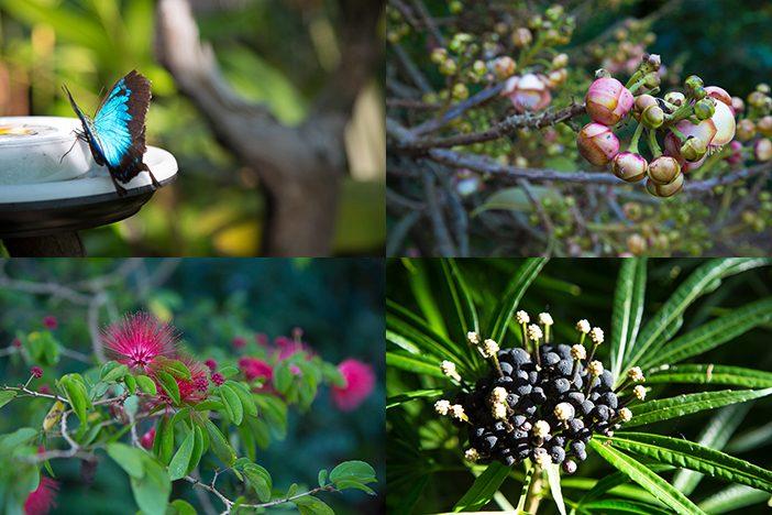 Botanischer Garten Cairns