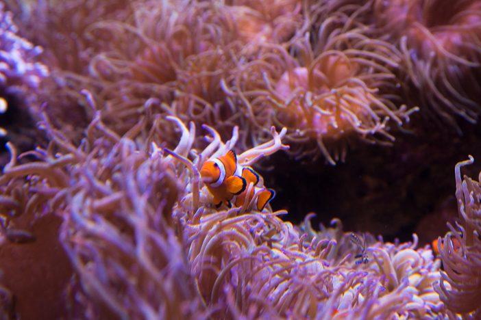 """Kein Dugong, aber immerhin ein """"Nemo"""""""