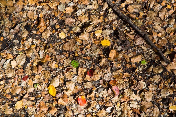 Bunte Farben überall - auch wenn kein Herbst ist