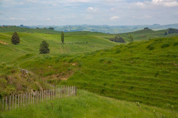 Grüne Hügel wohin das Auge reicht