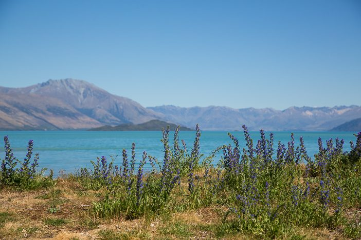 Blick auf den See von Kinloch aus