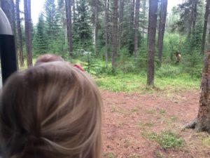 Die Tierwelt Kanada ist spannend für Kinder